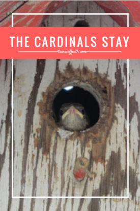 The Cardinals Stay